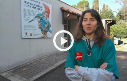 Intervista a Francesca Manzia, responsabile Centro Recupero Fauna Selvatica LIPU Roma