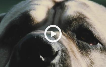 Europa selvaggia - Facce da cani