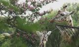 PASSIONE BIOPARCO - Il cuore verde del bioparco