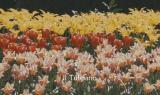 I fiori dell'amicizia